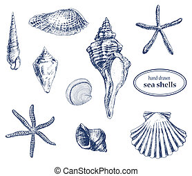 Sea shells - Set of various hand drawn sea shells