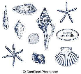 Set of various hand drawn sea shells