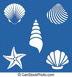 Sea shells - Set of white sea shells and starfish...