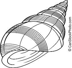 sea ??shells vector illustration