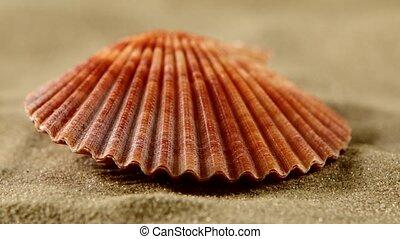 Sea shells with sand, close up, rotation - Beautiful sea...