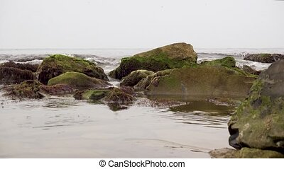Sea shore with rocks and moss - Coast of the sea with rocks...