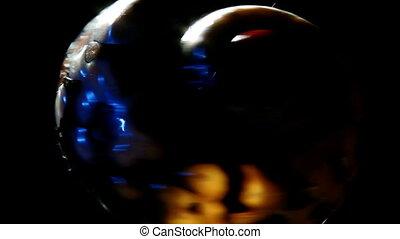 Sea snail, dark
