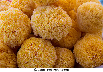 sea ??sponge detail in round shape and yellow color for bath...