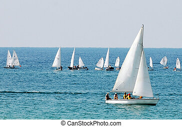 Sea Sport - Sailing - White sails boats at sea.