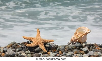 sea star and seashell on pebble beach, sea surf in background