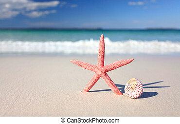 Sea star and seashell on the seashore