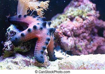 Sea star - Beautiful sea star in Omaha zoo aquarium