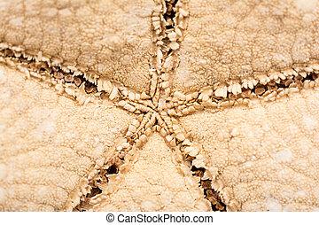 Sea Star Close Up