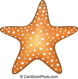 Sea star isolated on a white background