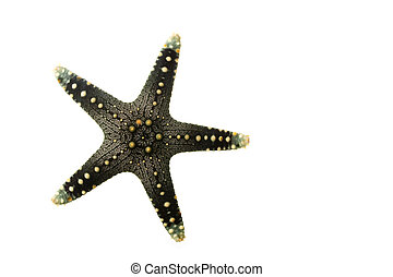 Sea Star isolated on white background.