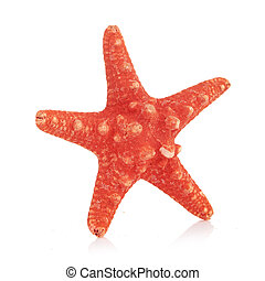 sea star isolated on white