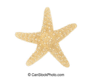 Sea star isolated over white background