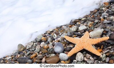 sea star on pebble beach with sea surf