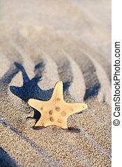 sea-star on rippled sand beach