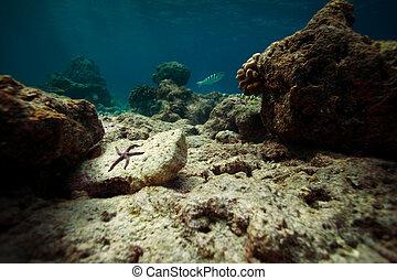 Sea star on the stone underwater