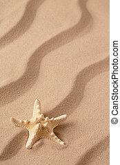 sea star or starfish on tropical beach sand