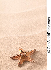 sea starfish on sandy beach
