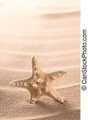 sea starfish standing in sand on the beach