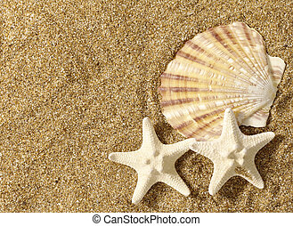 Sea still life over sand. Shellfish and starfish