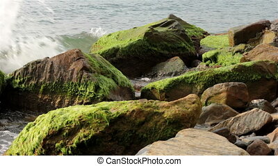 Sea stones covered with algae