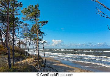 sea, storm, pine, water, sun, beach, sand, wave, spruce