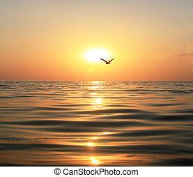 Sea, sunset and seagull