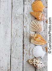 Sea theme border background seashell on a white vintage...