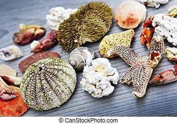 Sea treasures - Different types of marine life from Atlantic...