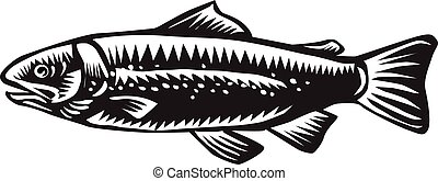 Sea Trout Spotted - Illustration of a spotted sea trout fish...