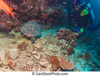 Sea Turtle and coral reef, Maldives