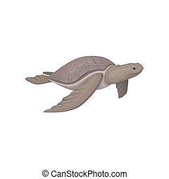 Sea turtle animal vector Illustration on a white background