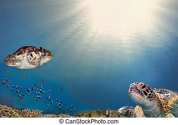 sea turtle close up over coral reef