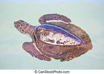 Sea turtle conservation Conservation of marine species