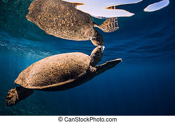 Sea turtle floating over beautiful natural ocean background. Green sea turtle closeup with reflection at surface