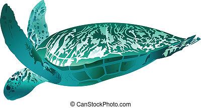Sea Turtle - Illustration of a sea turtle