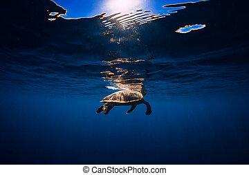 Sea turtle in blue ocean. Green sea turtle underwater