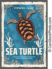 Sea turtle in ocean coral reefs