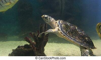 Sea turtle in the beautifully decorated Marine Aquarium.