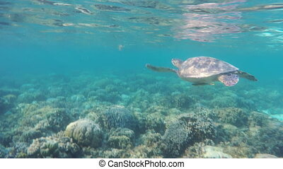 Sea turtle in the tropical sea