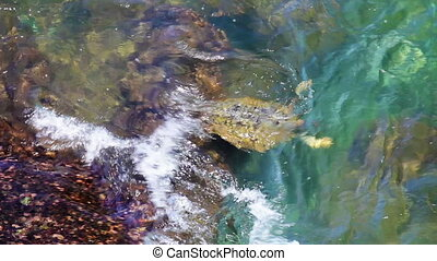 Sea turtle is struggling with waves - Video 1920x1080p - Sea...