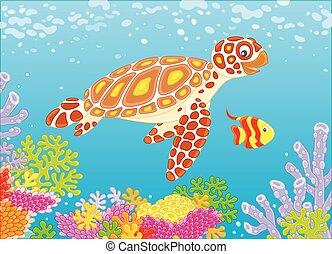Sea turtle on a reef - Funny loggerhead and a small striped...