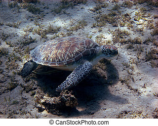 sea turtle on the ground