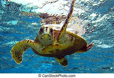 peery looking turtle