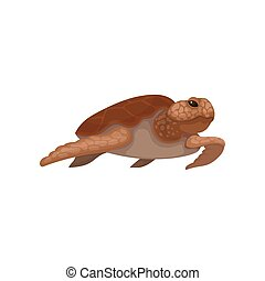 Sea turtle reptile animal vector Illustration on a white background