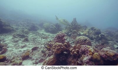 Sea turtle swimming among tropical fish and coral reef in blue sea water underwater view. Turtle and fish in ocean. Beautiful underwater world and inhabitants of deep sea. Snorkeling and diving