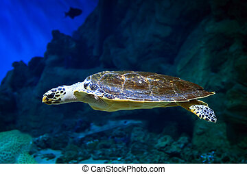Sea turtle swimming over the coral reef