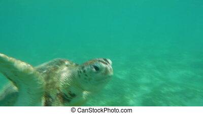 Sea turtle swimming underwater
