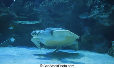 sea turtle swimming underwater in oceanarium