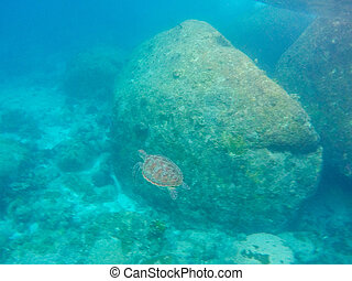 Sea turtle swimming underwater in the sea at Similan Marine National park